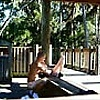 WILD PUBLIC SEX IN THE PARK OUTDOORS FLASHING NAKE…